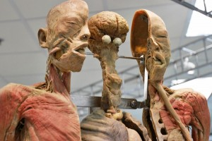 Museum Tubuh