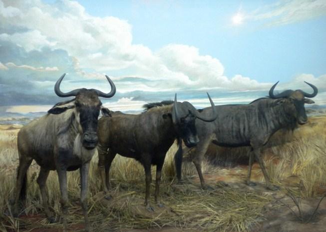 binatang di Museum Satwa Jatim Park 2